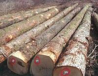 比利时ABC级橡木原木