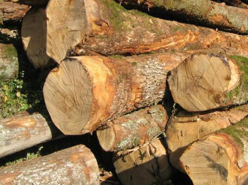 Cameroon,woods ,export,Chinese,,Cameroon's export of woods to China were affected by rising prices
