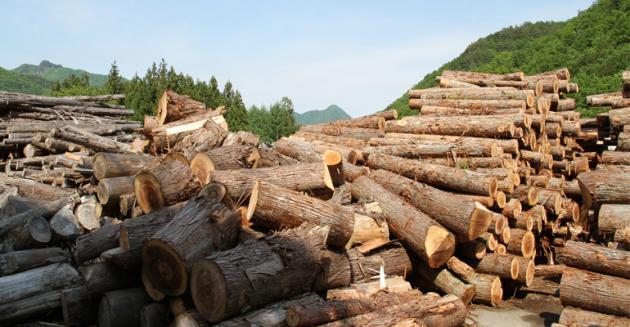 Timber,price,China,Japan,Chinese timber demand pushing up prices in Japan