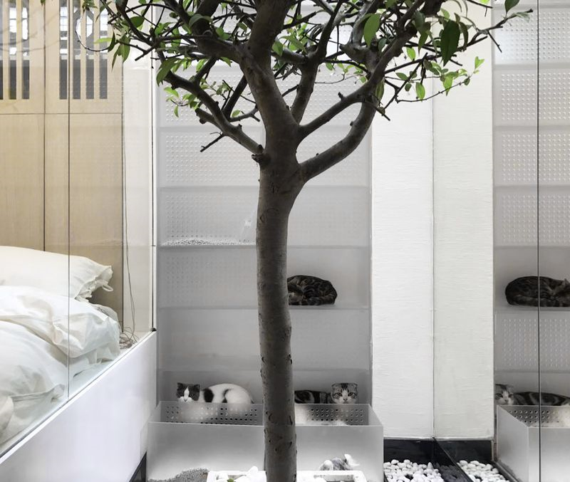 apartment ,Shanghai,51 cats,design,This tiny apartment in Shanghai was designed for two people, 51 cats