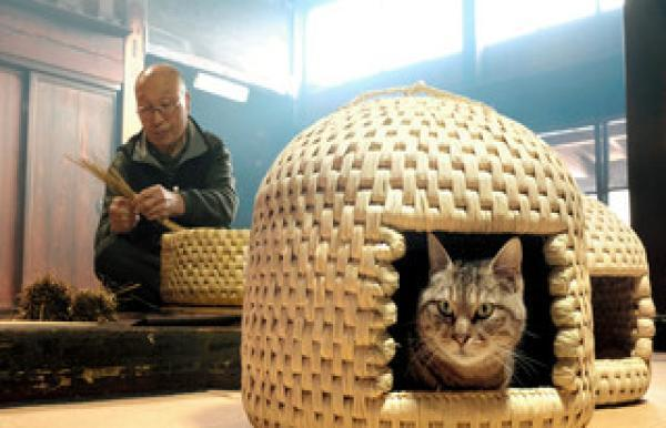 """Japanese,Cat Furniture,Pet ,High Price Fail to Stop its Popularity, Japanese """"Cat Furniture"""" Selling Well in the World"""